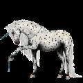 Rijpaard-eenhoorn Appaloosa Zwart sneeuwvlok