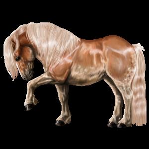 Pony Australian Pony Flaxen Chestnut