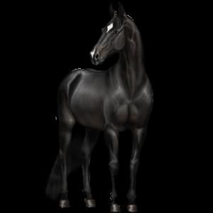 Pegasus Hanoveraner Blakk