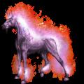 Unicorn pony Dun