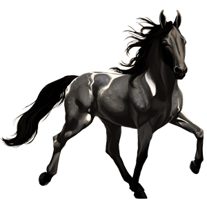 Riding Horse Appaloosa Black Snowflake