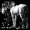 Cavallo da corsa Lusitano Baio