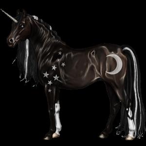 Riding unicorn Arabian Horse Black