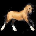 Pony Shetlandpony Dunkelfuchs