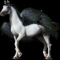 Pégaso de passeio Irish Sport Horse Branco