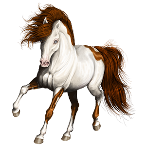 Riding pegasus Paint Horse Liver chestnut Overo