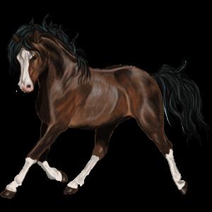 Pegasus pony Connemara Roan