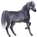 Poney Dartmoor Gris Souris