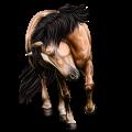Pony Australian Pony Dark Bay