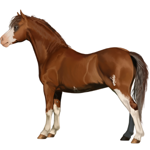 Pegasus pony Welsh Flaxen Liver chestnut