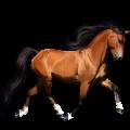 Koń wierzchowy Pinto Ciemnogniada Overo