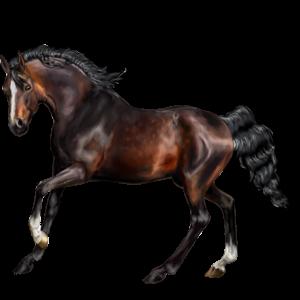 Riding Horse Quarter Horse Bay