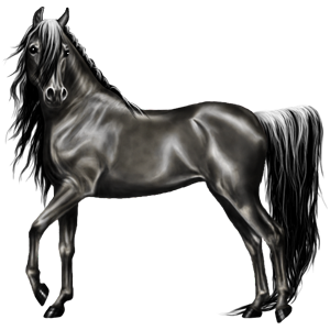 Riding Horse Hanoverian Light Gray