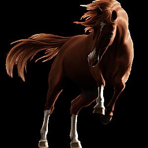 Cavalo de passeio Caçador Irlandês Preto