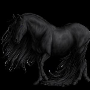 Poník Velšský kůň Tmavý hnědák