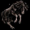Caballo de montar Pura raza española Negro