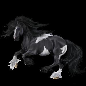 Ratsuhevonen Paint-hevonen Musta, overo