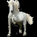 Cavallo da corsa Cavallo Arabo Grigio Puntellato