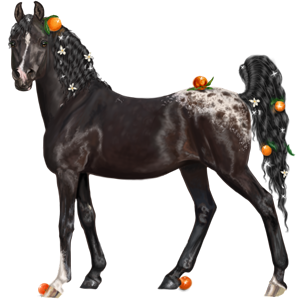Riding Horse Appaloosa Black Spotted Blanket