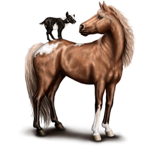 Pony Deutsches Reitpony Fuchs