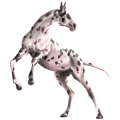 Ratsuhevonen Holsteininhevonen Musta
