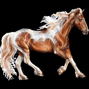 Riding Horse Mustang Palomino