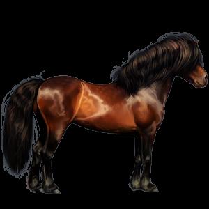 Pony Newfoundland Pony Chestnut
