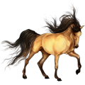 Riding Horse Argentinean Criollo Dun