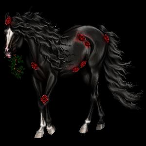 Koń wierzchowy Koń czystej krwi arabskiej Ciemnokasztanowata