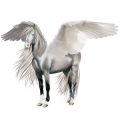 Pegaso Quarter Horse Grullo