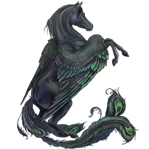 Riding pegasus Thoroughbred Black