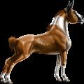 Pony Kerry Bog Chestnut