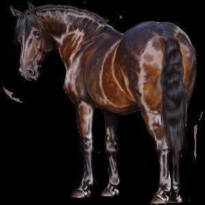 Jahalni konj Angleški polnokrvni Temno rdečkasto rjava