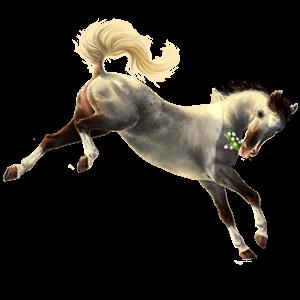 Pony Newfoundland Pony Lever kastanje