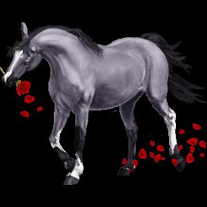 Riding Horse Hanoverian Light Grey