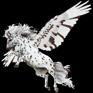 Pegasus Knabstrupper Black Leopard