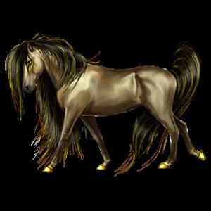 Cheval de selle Mustang Aubère