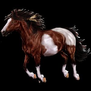 Koń wierzchowy Koń hanowerski Kasztanowata