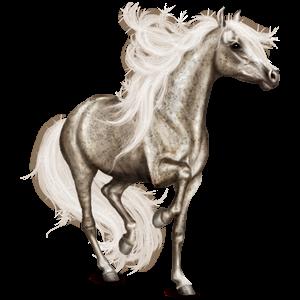 Riding Horse Arabian Horse Dapple Gray