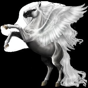 Pegasus Argentinsk Criollo Fux