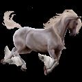 Pegasus Lusitano Dapple Gray