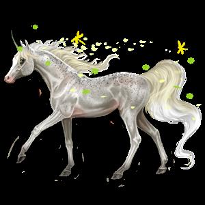 Unicorn pony Connemara Bay