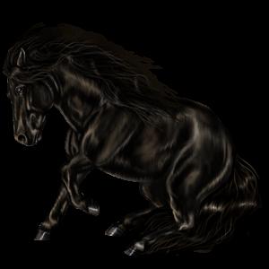 Ponny Shetlandsponny Körsbärsbrun