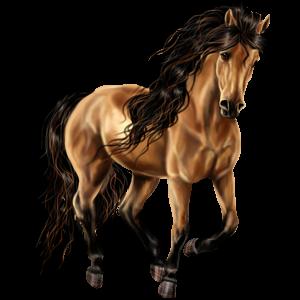 Pegasus Argentinsk Criollo Mörk linfux