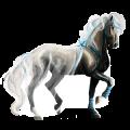 Riding Horse KWPN Dapple Gray