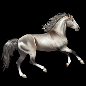 Riding Horse Akhal-Teke Mouse Gray