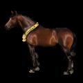 Riding Horse Icelandic horse Chestnut