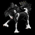 Riding Horse Vanner Black