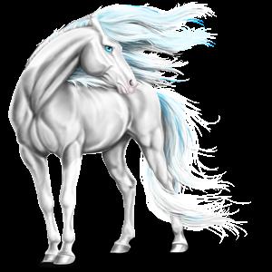 פגסוס סוס ספורט אירי ערמוני כהה בלונדיני