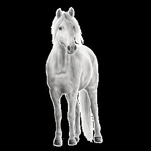 Pony Connemara-Pony Apfelschimmel